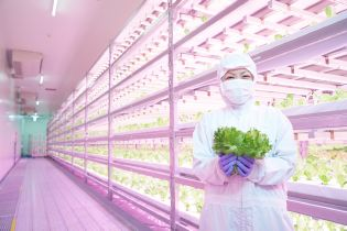 Japanese vertical farm equipped with horticultural LED lighting